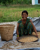 Women at Chitwan who separate the corn from the chaff.