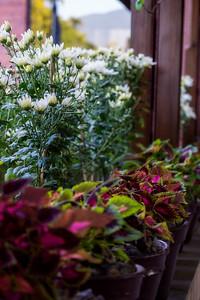Gokarna Flowers