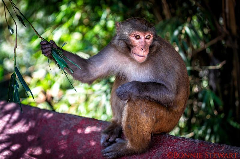 Monkey at the temple in Kathmandu