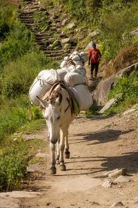 Pack Horses