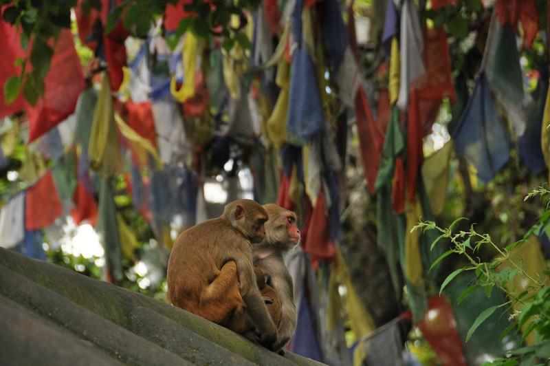 Monkey Temple - Swayambhunath, Kathmandu