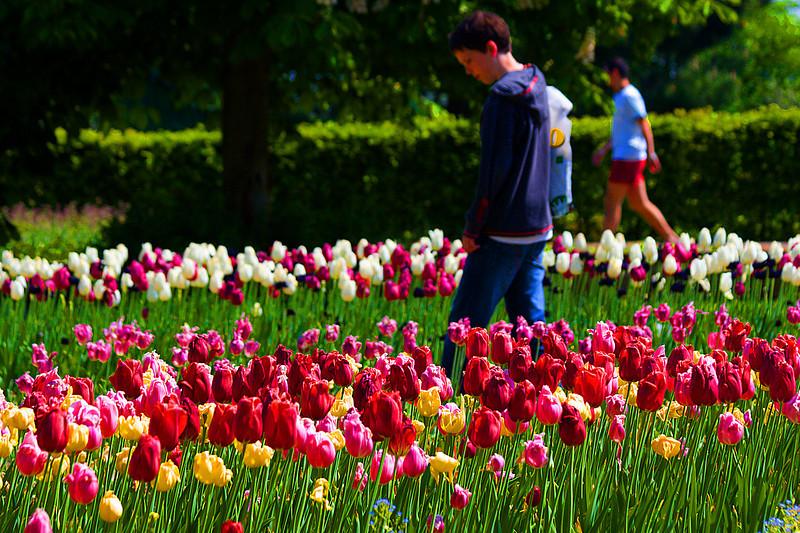 Walk along tulip beds