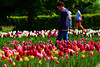 Walk along tulip beds