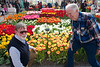 Keukenhof: Willem-Alexander Pavilion: Cees and Hibbe with Tulipa 'Royal van der Mark'