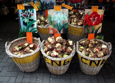 Bulbs for sale at Bloemenmarkt Stalls on the Singel Canal