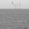 Windmills in the Ijsselmeer mist - not a good photo but I like the birds