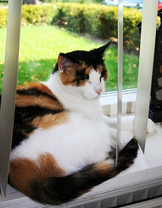 The cat's in the window ............ Meet Deba.