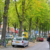 Beautiful trees in the middle of a Hoorn street.  Autumn leaves.