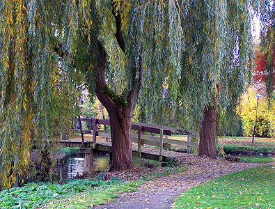 Liesbeths photo taken in Autumn - the colours are beautiful - I stood on this bridge to take some of the other photos in this album.
