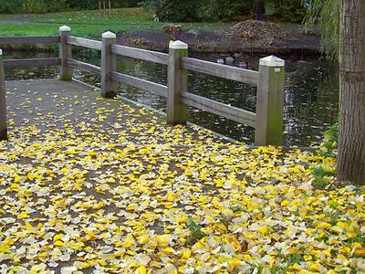 Fall photo taken by Liesbeth.