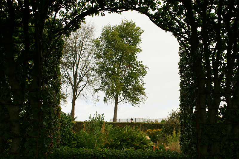 Looking out through the hedge window