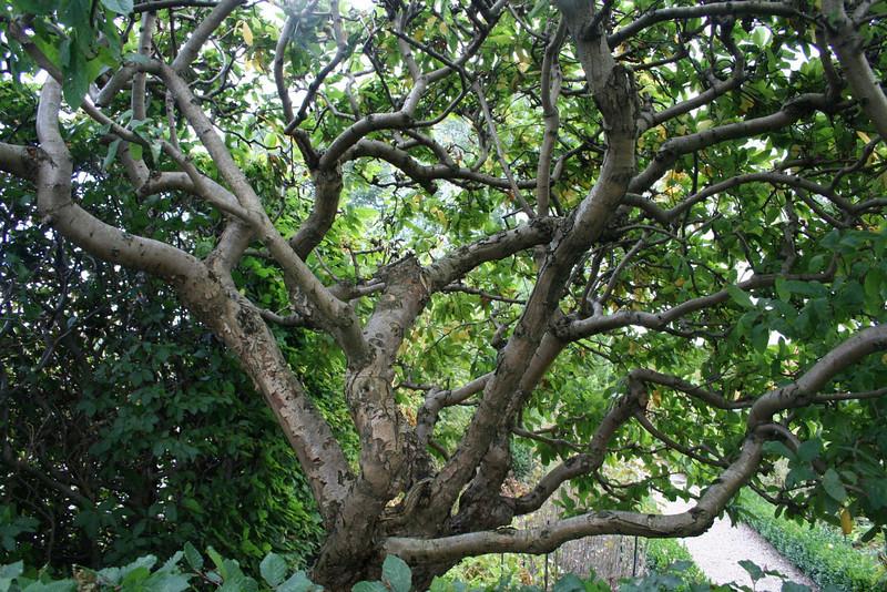 Tree in castle gardens