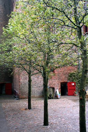 Trees in the castle courtyard