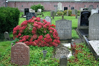 Beautiful flowers growing over the grave.
