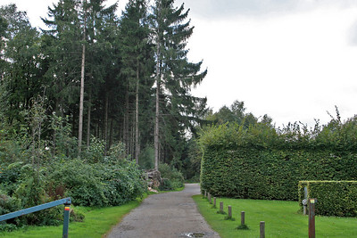 High trees and high hedges at Vaalserberg.