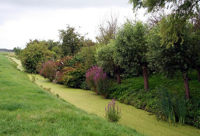 Another view of a beautiful garden by one of the canals that separate the properties in Midwoud.