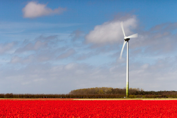 Wind turbine and tulip field