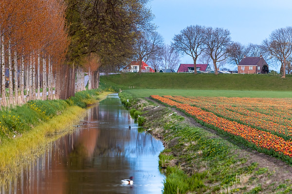 Dutch countryside at twilight
