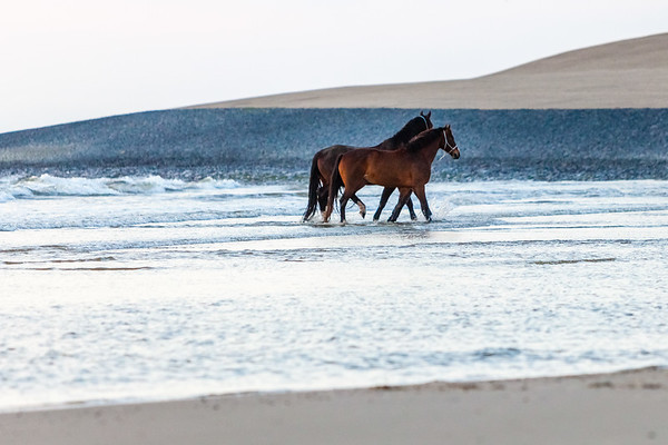 Horses bathing at sunset