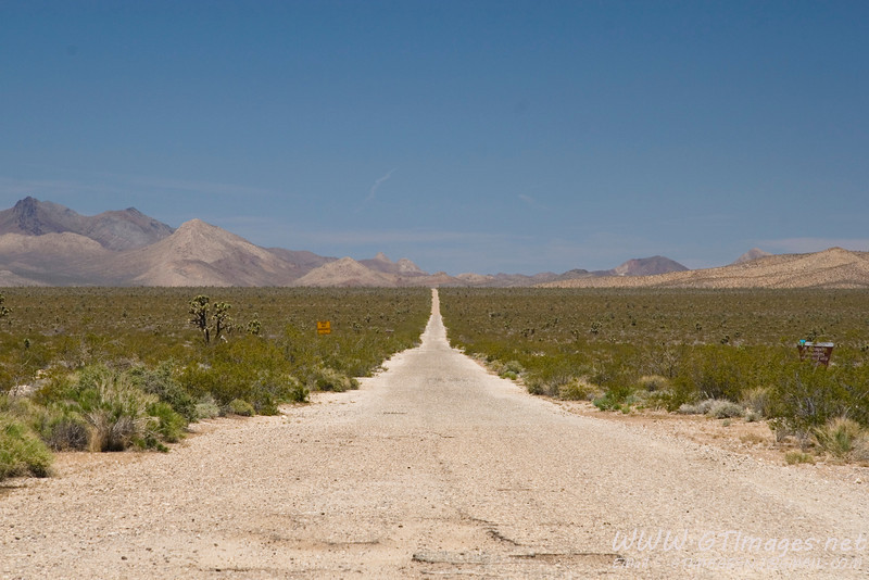 Mojave National Preserve. The road is definitely longer than it looks!