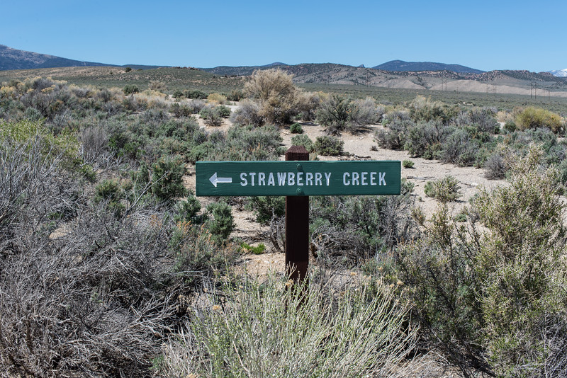 Strawberry Creek near Great Basin National Park, Nevada - April 2016