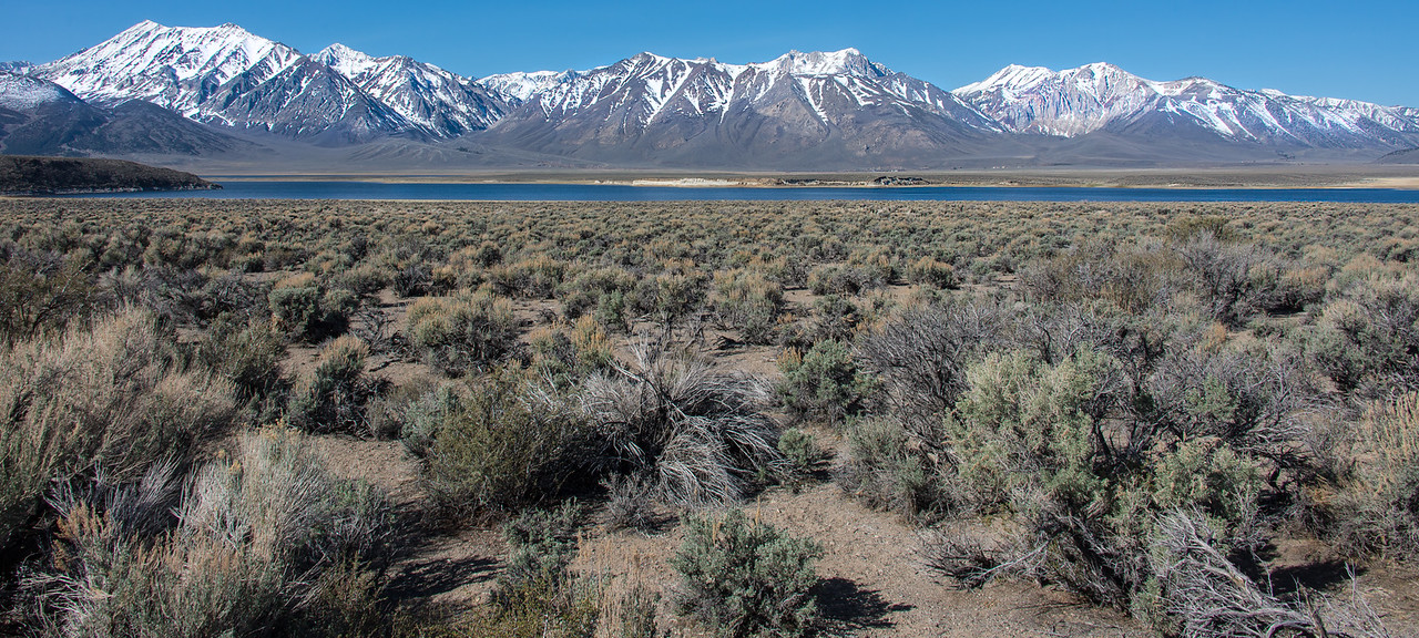 Toiyabe National Forest, Nevada - April 2016