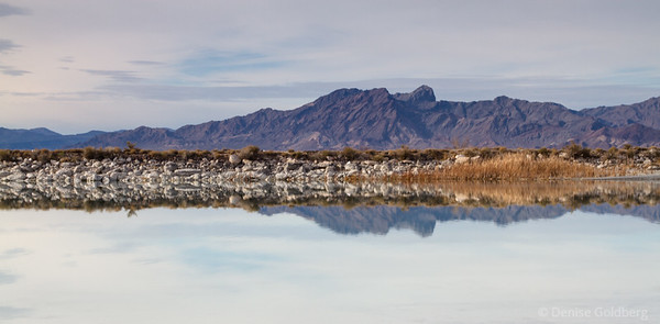 looking across Crystal Reservoir, Ash Meadows National Wildlife Refuge