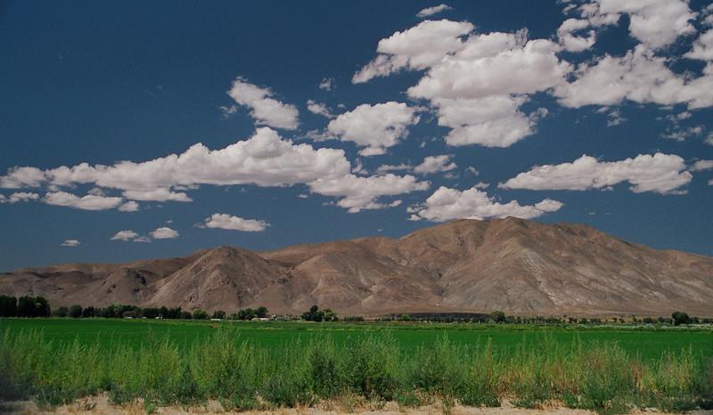 Field_Near_Smith_Valley2