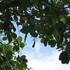 Nevis 07 045