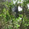 Nevis 07 081