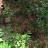 Nevis 07 053