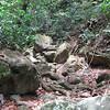 Nevis 07 060
