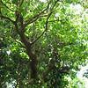 Nevis 07 066