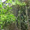 Nevis 07 082