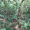 Nevis 07 074