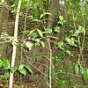 Nevis 07 061