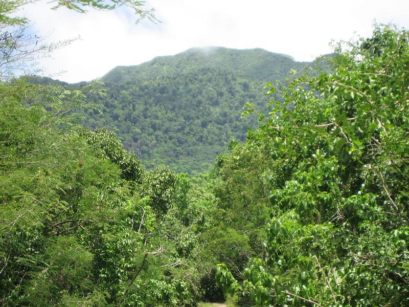 Nevis 07 084
