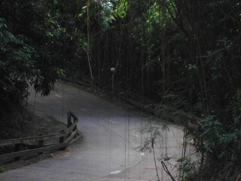 Nevis 07 217