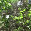 Nevis 07 078