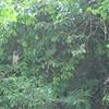 Nevis 07 262