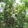 Nevis 07 069