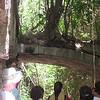 Nevis 07 077