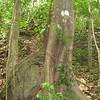 Nevis 07 062