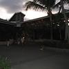Nevis 07 258