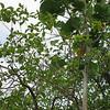 Nevis 07 046