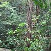 Nevis 07 058