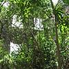 Nevis 07 080