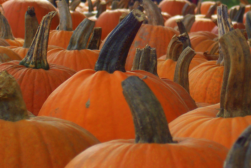 Pumpkin Tops