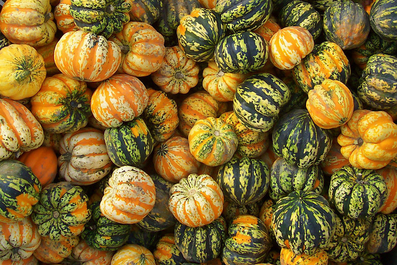 Gourds In A Box