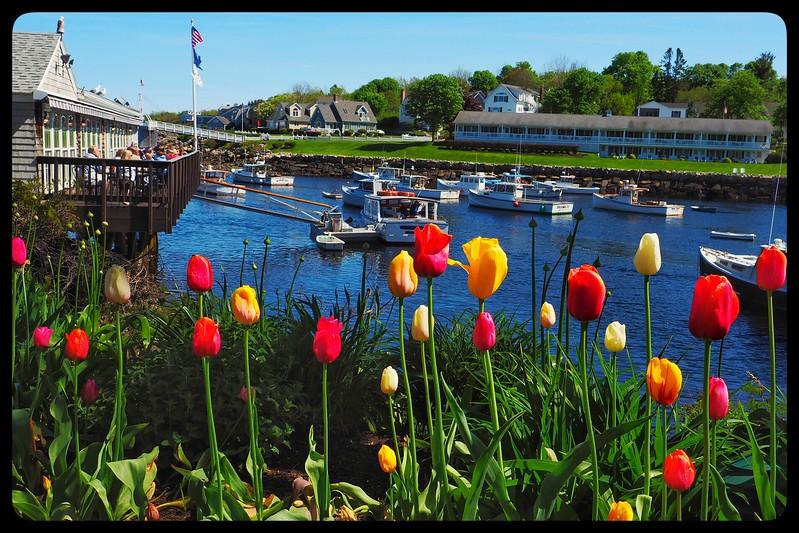 Roses - Ogunquit, Maine